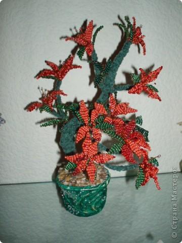 Дерево фото 6