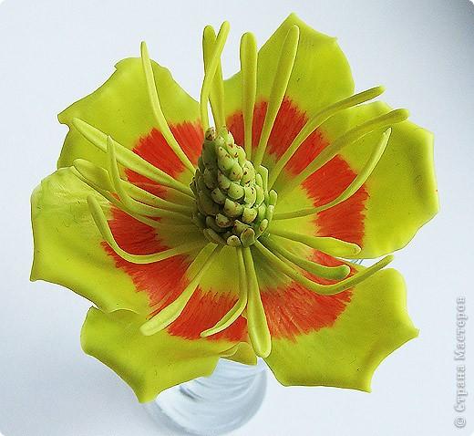 Тюльпанный цветок тюльпанного дерева, ждет своего часа сборки в веточку! :) Это чудо мы лепили со Светланой и мк засняли https://stranamasterov.ru/node/211613 фото 1