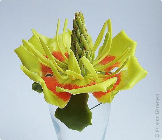 Тюльпанный цветок тюльпанного дерева, ждет своего часа сборки в веточку! :) Это чудо мы лепили со Светланой и мк засняли http://stranamasterov.ru/node/211613 фото 2