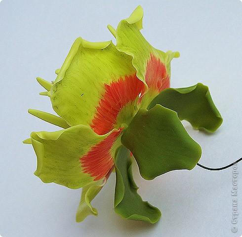 Тюльпанный цветок тюльпанного дерева, ждет своего часа сборки в веточку! :) Это чудо мы лепили со Светланой и мк засняли https://stranamasterov.ru/node/211613 фото 3