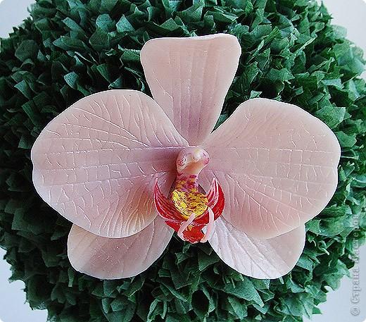 Тюльпанный цветок тюльпанного дерева, ждет своего часа сборки в веточку! :) Это чудо мы лепили со Светланой и мк засняли http://stranamasterov.ru/node/211613 фото 6