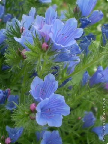 Цветы, все эти цветы вырастила моя мама. Правда, я не знаю название всех цветов, но если нужно, вечером смогу написать их названия.  На фото тюльпаны. фото 4