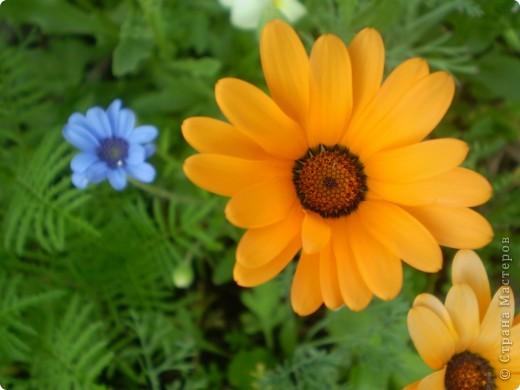 Цветы, все эти цветы вырастила моя мама. Правда, я не знаю название всех цветов, но если нужно, вечером смогу написать их названия.  На фото тюльпаны. фото 7