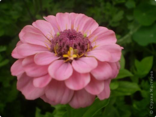 Цветы, все эти цветы вырастила моя мама. Правда, я не знаю название всех цветов, но если нужно, вечером смогу написать их названия.  На фото тюльпаны. фото 11