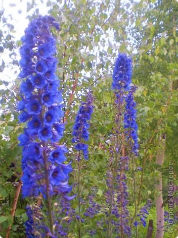 Цветы, все эти цветы вырастила моя мама. Правда, я не знаю название всех цветов, но если нужно, вечером смогу написать их названия.  На фото тюльпаны. фото 12