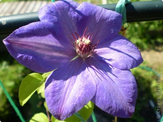 Цветы, все эти цветы вырастила моя мама. Правда, я не знаю название всех цветов, но если нужно, вечером смогу написать их названия.  На фото тюльпаны. фото 15