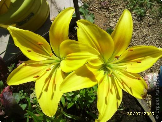 Цветы, все эти цветы вырастила моя мама. Правда, я не знаю название всех цветов, но если нужно, вечером смогу написать их названия.  На фото тюльпаны. фото 19