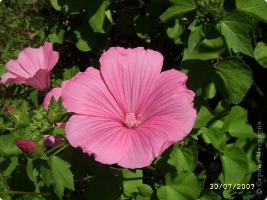 Цветы, все эти цветы вырастила моя мама. Правда, я не знаю название всех цветов, но если нужно, вечером смогу написать их названия.  На фото тюльпаны. фото 20