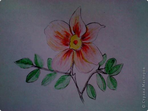 карандашом фото 6