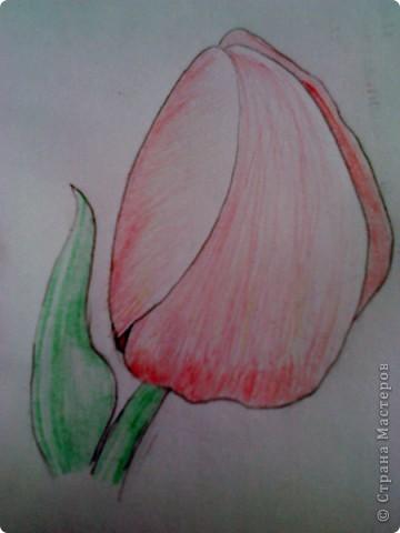 карандашом фото 5