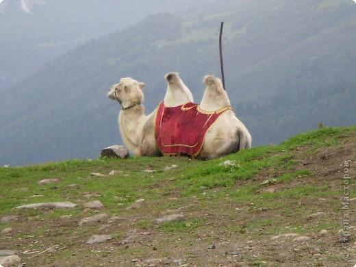 Ну, вот и обещанный фоторепортаж о поездке в Домбай. Домбай - это поселок в Карачаево - Черкессии, один из знаменитых горнолыжных курортов России.  Мы ехали через перевал Гум - баши. Было раннее утро, когда поднялись на перевал, и поэтому горы Кавказского хребта еще скрыты в утренней дымке. Виды перевала Гум - баши. фото 54