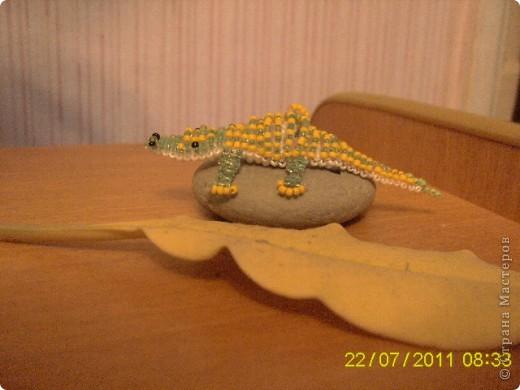Крокодил. фото 1