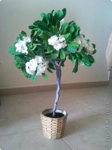 """Как-то я загорелась идеей слепить """"дерево-бонсай"""". Начала изучать материал и поняла, что Бонсай - это искусство выращивания карликовых деревьев. Мне очень нравятся деревья с белыми цветами и дурманящим запахом. Поправьте меня, кажется это Плюмерия... фото 1"""