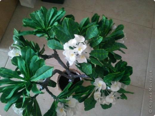 """Как-то я загорелась идеей слепить """"дерево-бонсай"""". Начала изучать материал и поняла, что Бонсай - это искусство выращивания карликовых деревьев. Мне очень нравятся деревья с белыми цветами и дурманящим запахом. Поправьте меня, кажется это Плюмерия... фото 2"""
