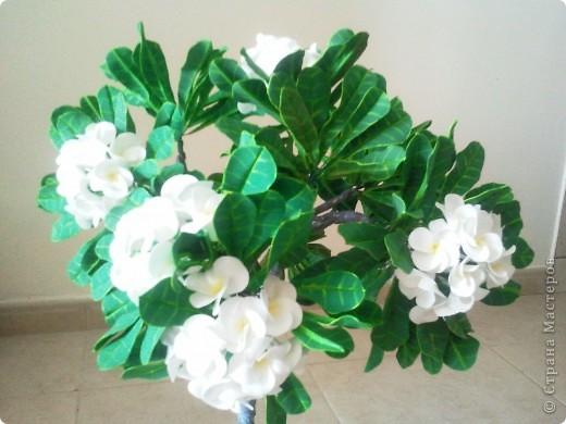 """Как-то я загорелась идеей слепить """"дерево-бонсай"""". Начала изучать материал и поняла, что Бонсай - это искусство выращивания карликовых деревьев. Мне очень нравятся деревья с белыми цветами и дурманящим запахом. Поправьте меня, кажется это Плюмерия... фото 3"""