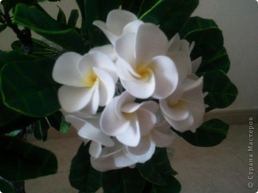 """Как-то я загорелась идеей слепить """"дерево-бонсай"""". Начала изучать материал и поняла, что Бонсай - это искусство выращивания карликовых деревьев. Мне очень нравятся деревья с белыми цветами и дурманящим запахом. Поправьте меня, кажется это Плюмерия... фото 4"""