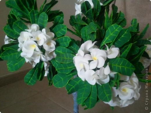 """Как-то я загорелась идеей слепить """"дерево-бонсай"""". Начала изучать материал и поняла, что Бонсай - это искусство выращивания карликовых деревьев. Мне очень нравятся деревья с белыми цветами и дурманящим запахом. Поправьте меня, кажется это Плюмерия... фото 5"""