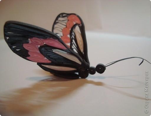 Бабочка-бразильянка обитает только в Южной Америке, и главная её особенность – это самая долгоживущая бабочка в мире! Живёт она до 130 дней, тогда когда многие виды погибают уже через сутки…Питается тропическим нектаром и соком фруктов, вот это диета!!! Не жизнь, а сказка! фото 2
