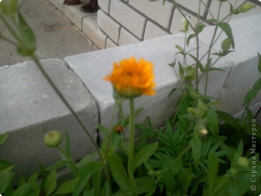 Приглашаю к себе в сад. фото 3