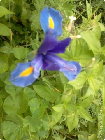 Приглашаю к себе в сад. фото 4