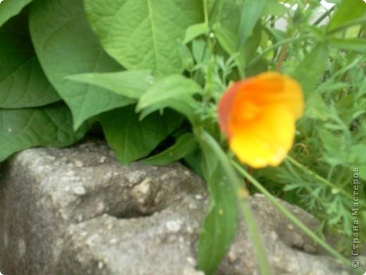Приглашаю к себе в сад. фото 5