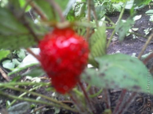 Приглашаю к себе в сад. фото 6