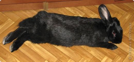 После опреции нашему кролику, уже прошло 3 месяца, и я решила поделиться впечатлениями: агрессия - прошла! У кролика появился четкий график, что очень удобно! Когда нужно ложиться младшей дочери спать, Кнопик, часто, к этому времени сам покидает нашу спальню!  фото 13