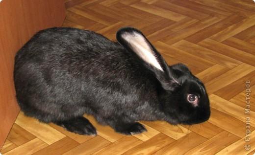 После опреции нашему кролику, уже прошло 3 месяца, и я решила поделиться впечатлениями: агрессия - прошла! У кролика появился четкий график, что очень удобно! Когда нужно ложиться младшей дочери спать, Кнопик, часто, к этому времени сам покидает нашу спальню!  фото 10