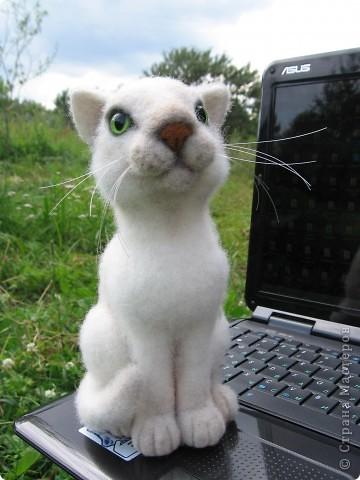 Феликс - кот эрудит, у компьютера сидит. Интеллектом обладает, всё на свете понимает. Рост 20 см. Шерсть, пластик. фото 1