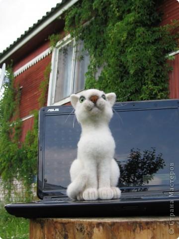 Феликс - кот эрудит, у компьютера сидит. Интеллектом обладает, всё на свете понимает. Рост 20 см. Шерсть, пластик. фото 6