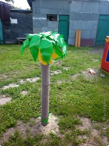 Вот и у нас выросла пальма с бананами фото 2