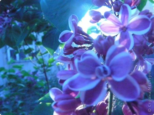 Приглашаю к себе в сад. фото 8