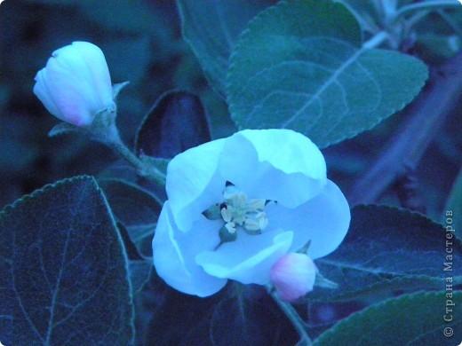 Приглашаю к себе в сад. фото 7