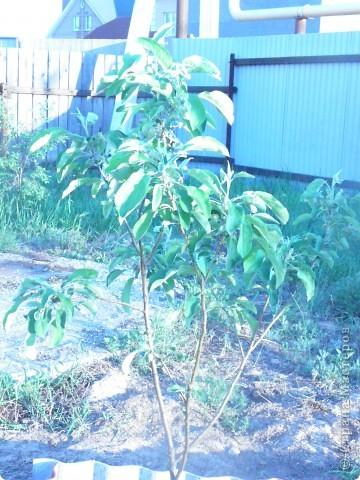 Приглашаю к себе в сад. фото 10