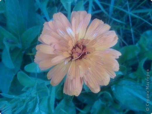 В мире цветов  В мире цветов так тепло и прохладно Целый букет ароматов и звуков… Каждый цветок – он по-своему нарядный… В форме изысканных праздничных кубков.  В мире цветов я желала б остаться Стать героиней рассказов и сказок, Чтоб красотой каждый день любоваться, Слиться с гармонией света и красок.  Автор: Лариса Кузьминская  фото 7