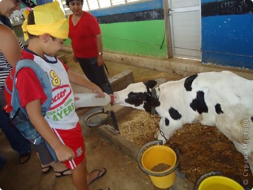 В воскресенье,17 июля, мы побывали с экскурсией в кибуце Мааган Михаэль,что на севере Израиля. Очень интересно было побывать на ферме,и особенно - в отделе для молодняка. фото 1
