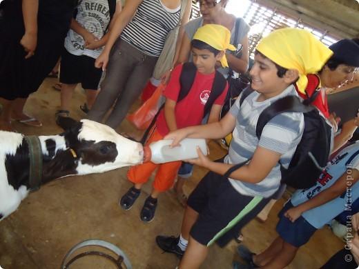 В воскресенье,17 июля, мы побывали с экскурсией в кибуце Мааган Михаэль,что на севере Израиля. Очень интересно было побывать на ферме,и особенно - в отделе для молодняка. фото 3
