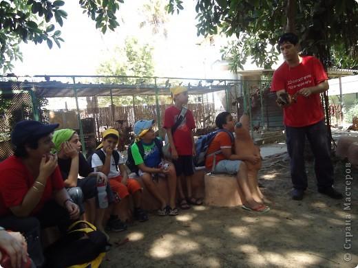 В воскресенье,17 июля, мы побывали с экскурсией в кибуце Мааган Михаэль,что на севере Израиля. Очень интересно было побывать на ферме,и особенно - в отделе для молодняка. фото 5