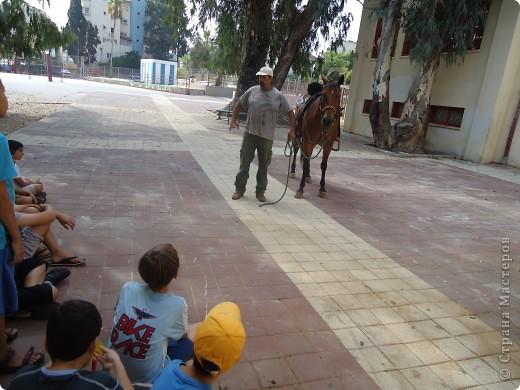 В воскресенье,17 июля, мы побывали с экскурсией в кибуце Мааган Михаэль,что на севере Израиля. Очень интересно было побывать на ферме,и особенно - в отделе для молодняка. фото 23