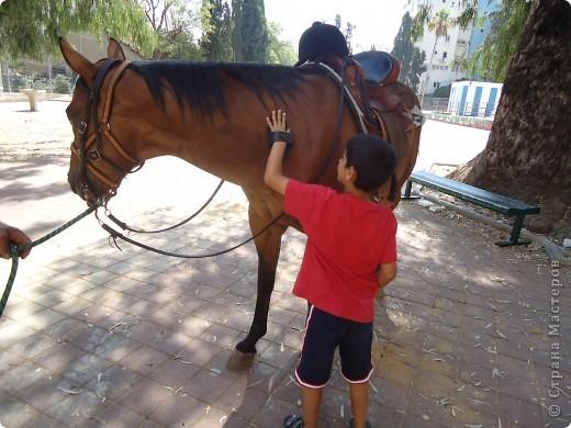 В воскресенье,17 июля, мы побывали с экскурсией в кибуце Мааган Михаэль,что на севере Израиля. Очень интересно было побывать на ферме,и особенно - в отделе для молодняка. фото 25