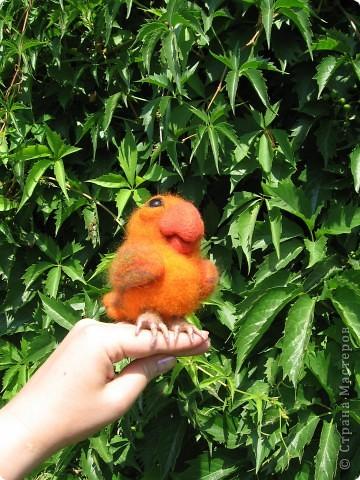 Птиц, фамилия Клевакин, забиякин и кривлякин. Удивительный птенец, сорванец и удалец! Рост 11 см. шесть, стекло. фото 3
