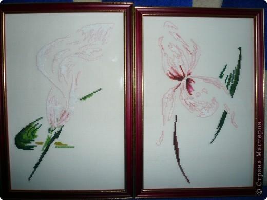 Орхидеи-часики фото 2