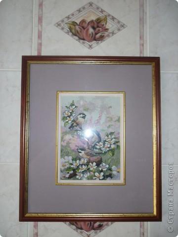 вот синицы и прилетели на мою кухню))) фото 1