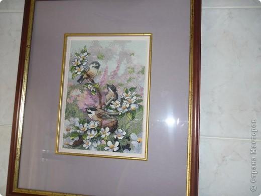 вот синицы и прилетели на мою кухню))) фото 2