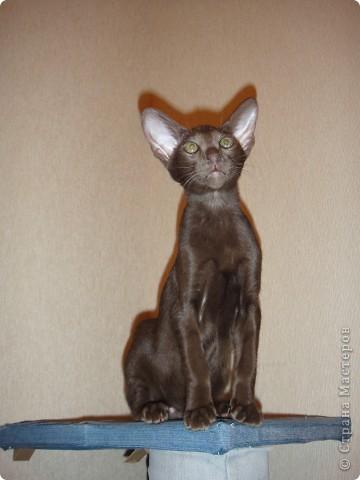 Мой первый опыт в плетении из газет - кошкин дом))) фото 3