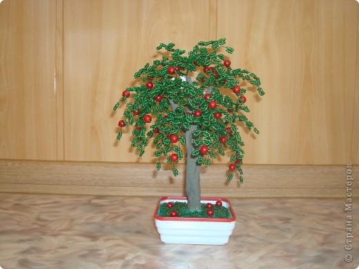 Яблонька. фото 1