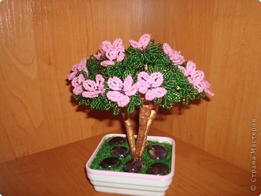 Яблонька. фото 3