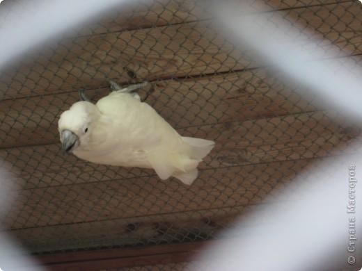 Мои дети съездили в Екатеринбург и побывали в зоопарке. Привезли фотографии, чтобы порадовать меня. Не все удачные, но кое-что я выбрала. Это белый медведь. фото 16
