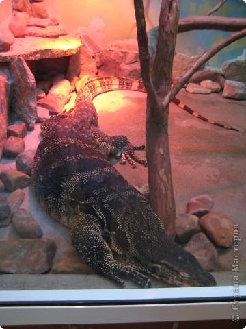 Мои дети съездили в Екатеринбург и побывали в зоопарке. Привезли фотографии, чтобы порадовать меня. Не все удачные, но кое-что я выбрала. Это белый медведь. фото 13