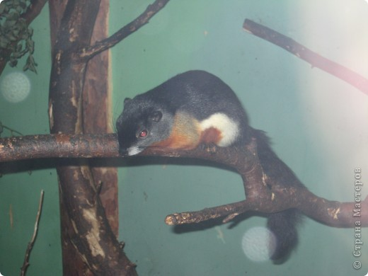 Мои дети съездили в Екатеринбург и побывали в зоопарке. Привезли фотографии, чтобы порадовать меня. Не все удачные, но кое-что я выбрала. Это белый медведь. фото 8